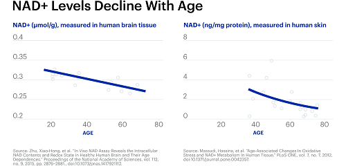 nad+ levels decline with age