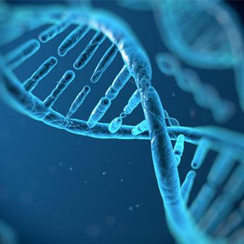 Repair DNA